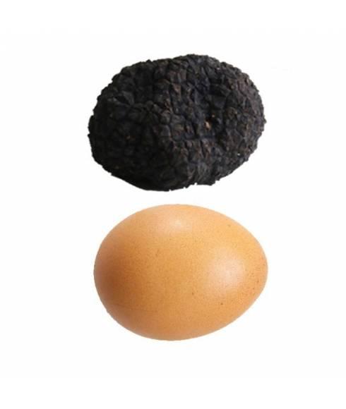 Uncinatum truffle- Autumn truffle L -70gr
