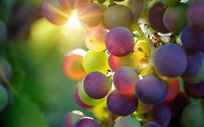 detailbeeld van druiven tegen licht.